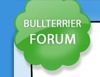 Bullterrier-Forum